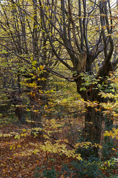 Epping Forest II.